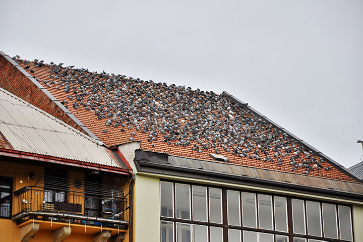 A2B Pest Control are able to install spikes to deter birds from roofs in Quedgeley.