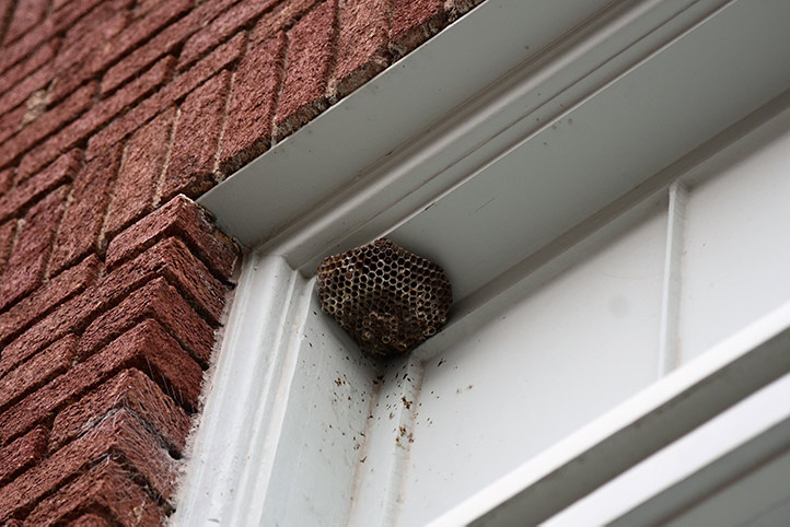 We provide a wasp nest removal service for domestic and commercial properties in Quedgeley.